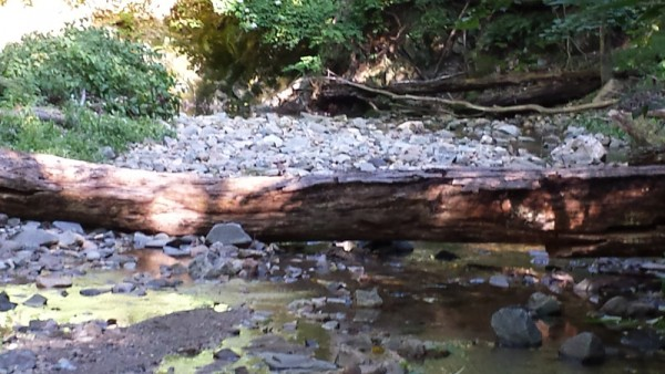 Downed trunk blocking stepping stone crossing.