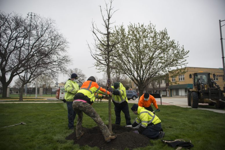 In celebration of Arbor Day, a tree was planted at the park district on April 24 by park district staff and the village's public works department. | Alex Rogals, Staff Photographer