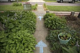 Sidewalk chalk directions during the Garden Walk ensured gardens had separate entrances and exits and kept people socially distanced. | Alex Rogals, Staff Photographer