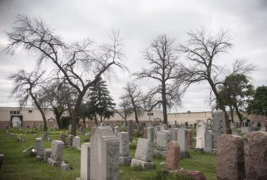 Many dead trees at Waldheim Cemetery in Forest Park. A great number of ash and elm trees have died in recent years. | William Camargo/Staff Photographer