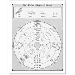 Shrew Skeleton Diagram Labeled Evinrude Etec 115 Wiring Owl Pellet Bone Chart Parlo Buenacocina Co