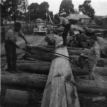 History Forestry Corporation Of Nsw