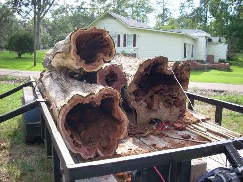 Red Cedar Log Prices