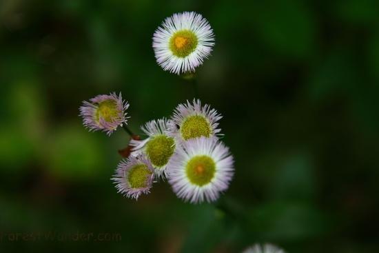 White Wildflower Yellow Center