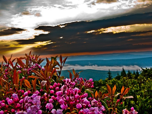 Summer Flowers Sunrise in the Mountains