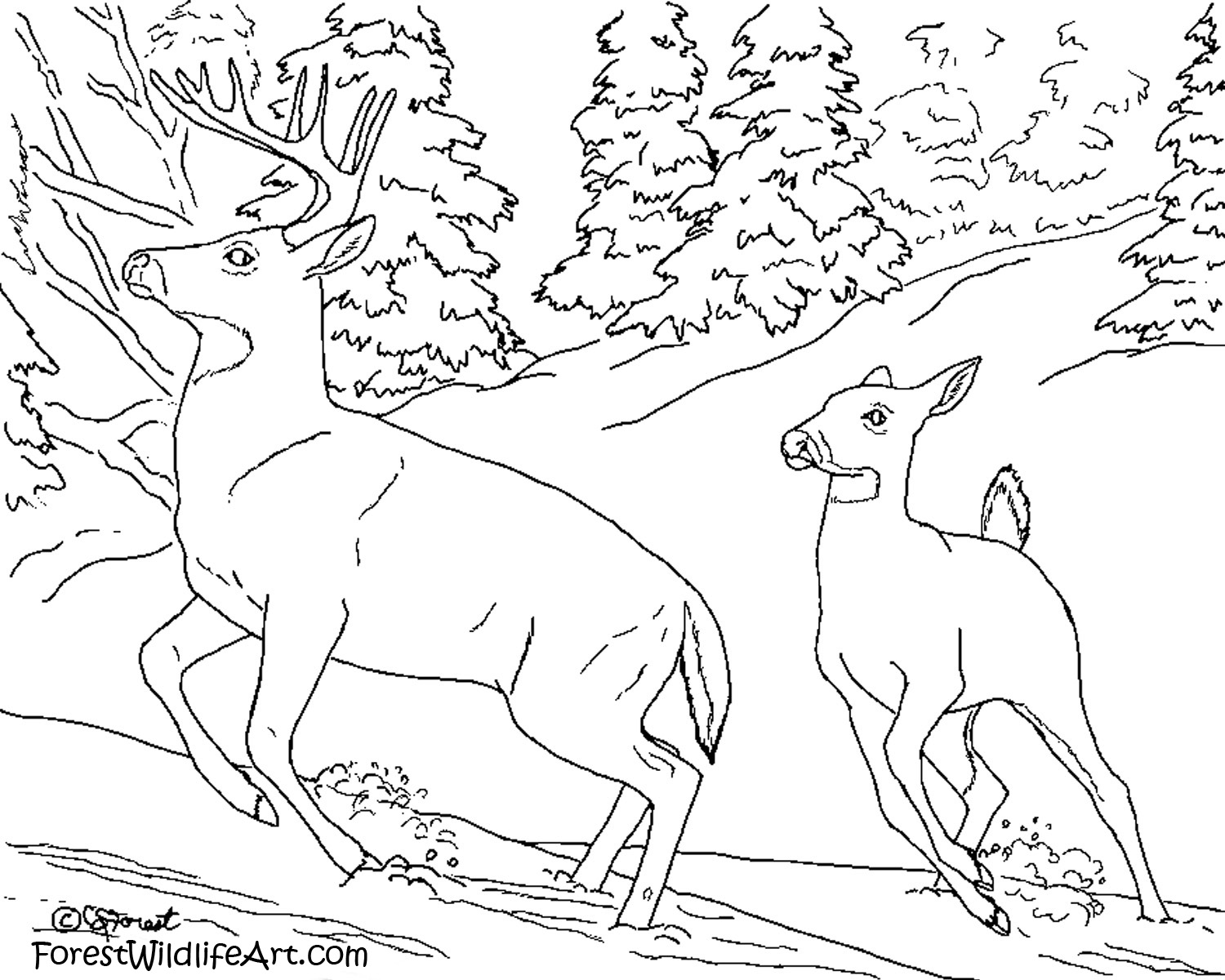Crista Forest's Animals & Art: Learn Wildlife For Kids