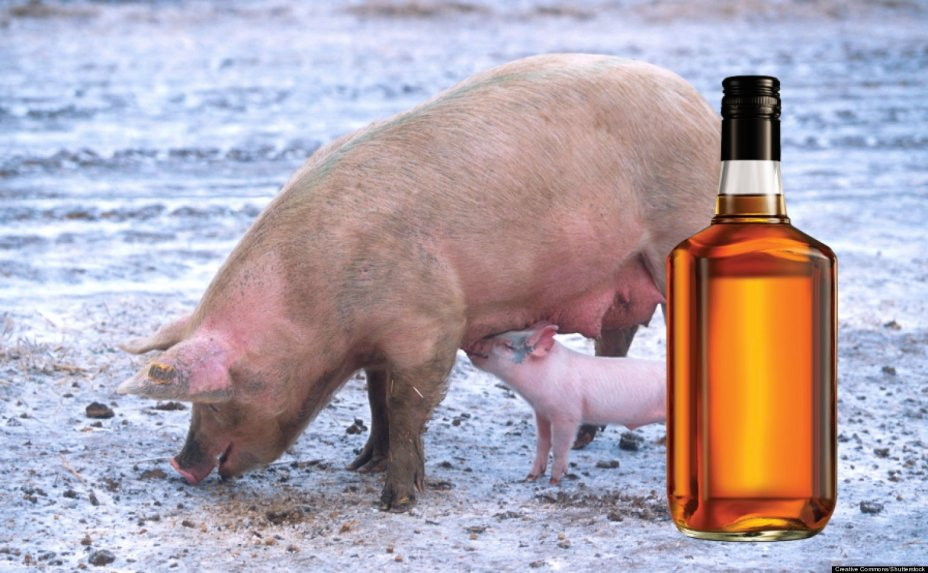 whiskey-flavored bacon