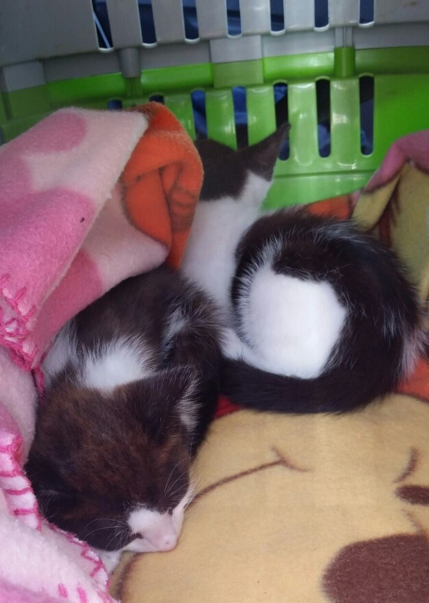 picture of two kittens sleeping