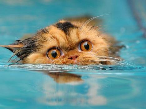cat-treading-water