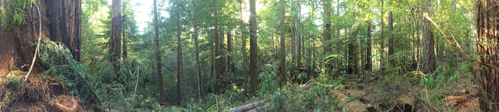 Forever Redwood partners with the Sanctuary Forest in Whitethorn, CA