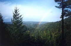 A Rainbow Over the Redwoods