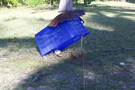 Chicken trap. Here chook, chook, chook.