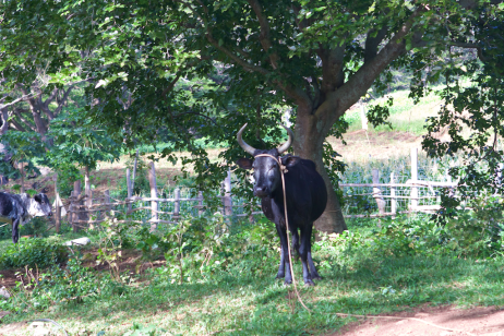 The local /people/ are friendly. This bull wasn't. Olé