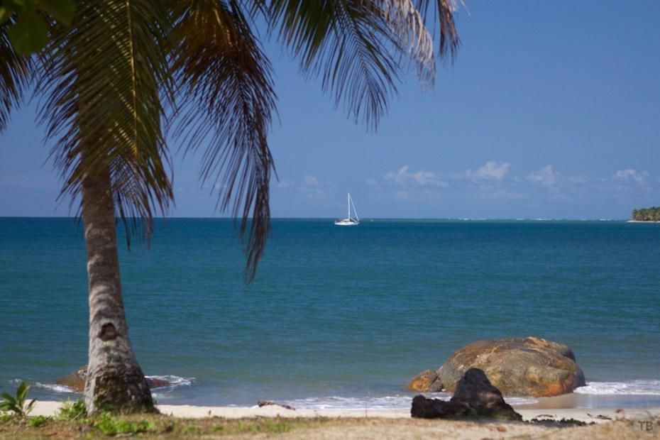 Convivia - E. Coast Madagascar