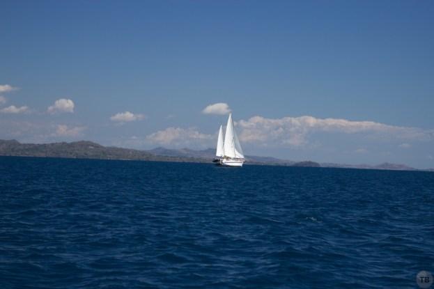 Caminante, full sail