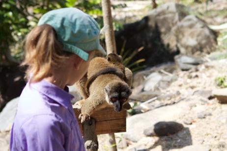 momma lemur