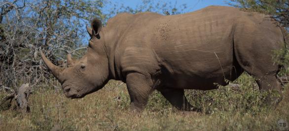Rhino, wow!