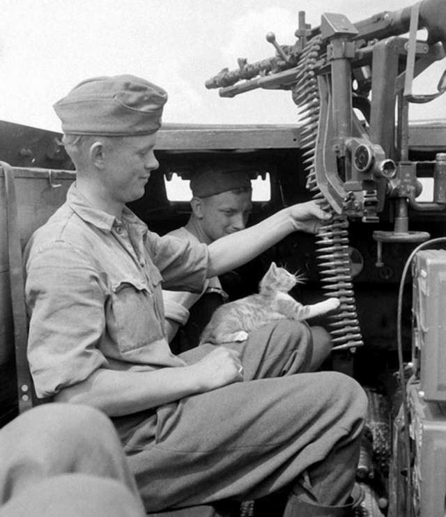 German soldiers and a kitten playing with an MG34 ammo belt
