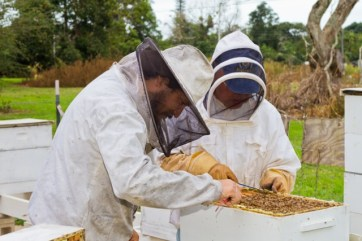 Trujillo and Takahashi at the apiary