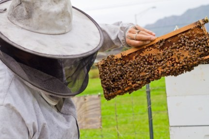 Evaluating condition of brood and honeycomb
