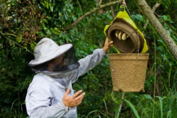 Pheremone-scented trapping