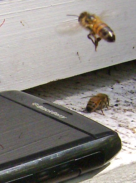 Cell Phone and bees