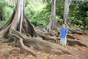 Tour guide Star Gampon stands by the famous fig trees from the Jurassic Park movie.