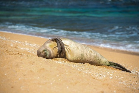 A Hawaiian monk seal was caught hugging itself by British photographer Claire Lower, who spent 90 days on Kaua'i this past summer. 'I'm in love with the island and its people,' she said, promising to return next year. Meanwhile, you can see her work at www.clairelowerphotography.com.