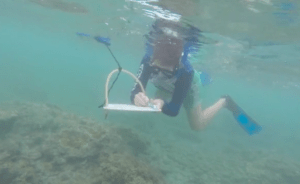A researcher is seen here taking notes on Kaua'i's black band coral disease.