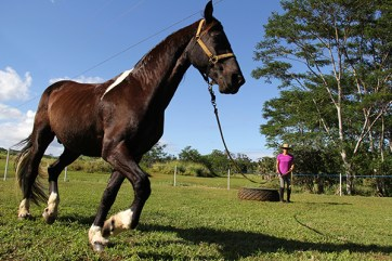 Troubador, a Friesian-and-Dutch Warmblood horse, changes his gait according to Marti Kitch's breathing.