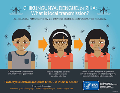 local_transmission_chikv_denv_zika