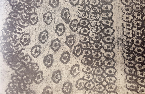 This picture shows a section of an old Hawaiian kihei, or shawl, made with kapa from Kaua'i. Though the picture is in black and white, this kapa was originally yellow with turmeric dye, and the design was made with stamps soaked in ink made from kukui nuts.