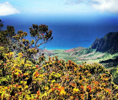 'Ohi'a lehua trees with Kalalau Valley on the background.