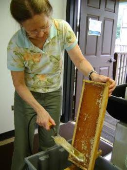 Dr. Georgeanne Purvinis scrapes off the caps of honeycombs to harvest a new batch of honey. Photo courtesy of UH