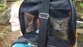 In November, Halli Holmgren hiked 11 miles to Kalalau with a pet carrier (provided by Judy Dalton, of Kaua'i Community Cat Project) attached to the top of her backpack, with the intention of bringing a kitten back to be adopted by somebody else. She brought back Kukui, and he was already adopted by a family on Kaua'i.