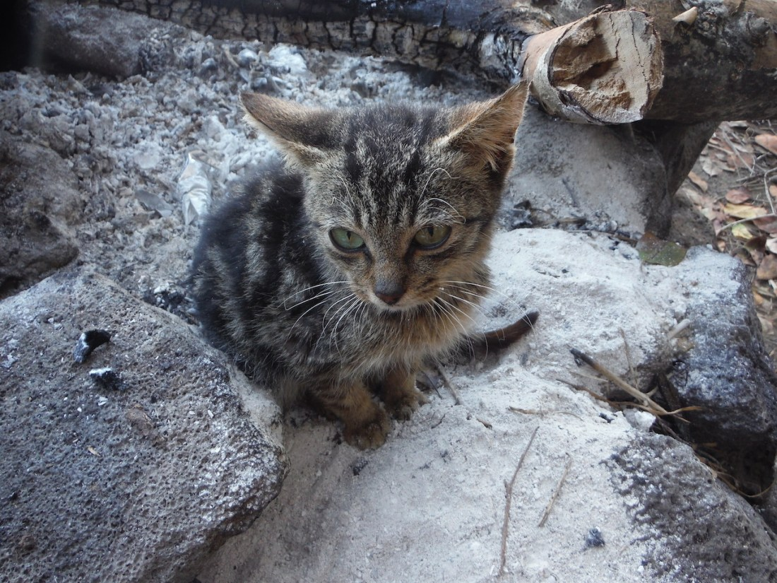 Kaua'i Community Cat Project: 2016 Our Best Year Yet