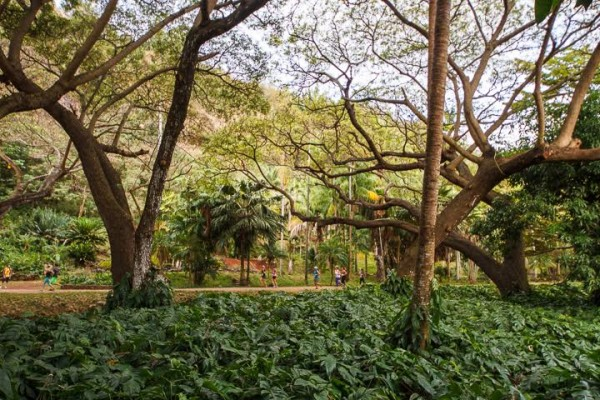 National Tropical Botanical Garden Is A Network Of Diverse Gardens And A  Not For Profit Organization Dedicated To Enriching Life Through Discovery,  ...