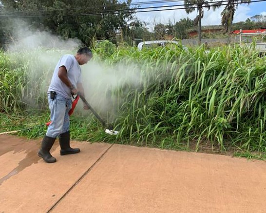 County workers piloted a weed steamer to control vegetation in Kapa'a on Friday. Photo courtesy of County of Kaua'i