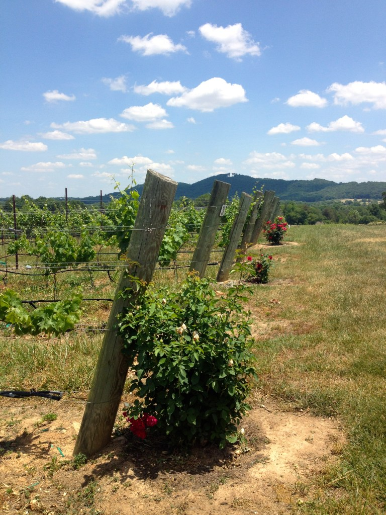 raffaldini vineyard vines