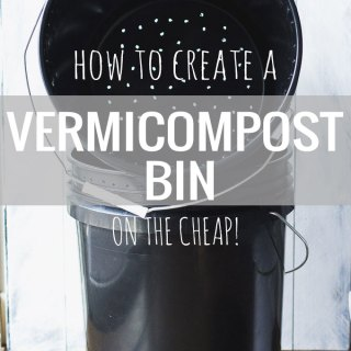 Vermicomposting: The Set Up