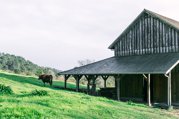 A barn with a cow in a green field.