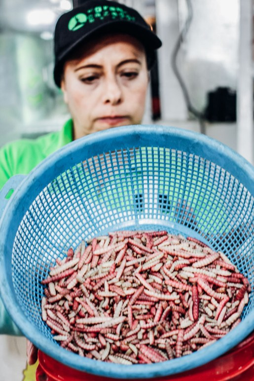 A woman holding a large bin of meal worms for frying on the Sabores Mexico City food tour at Mercado de San Juan.