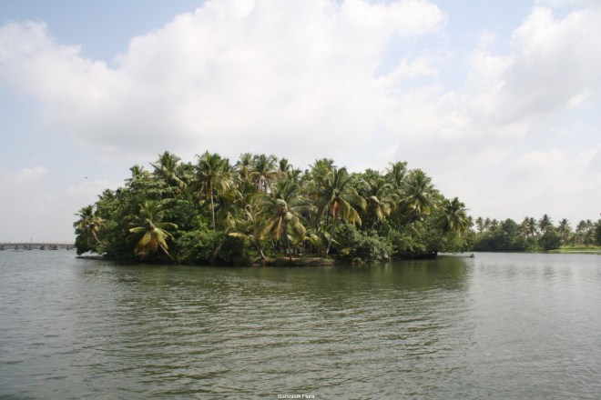 My visit to the backwaters: Kerala