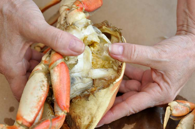 How to Clean Dungeness Crab
