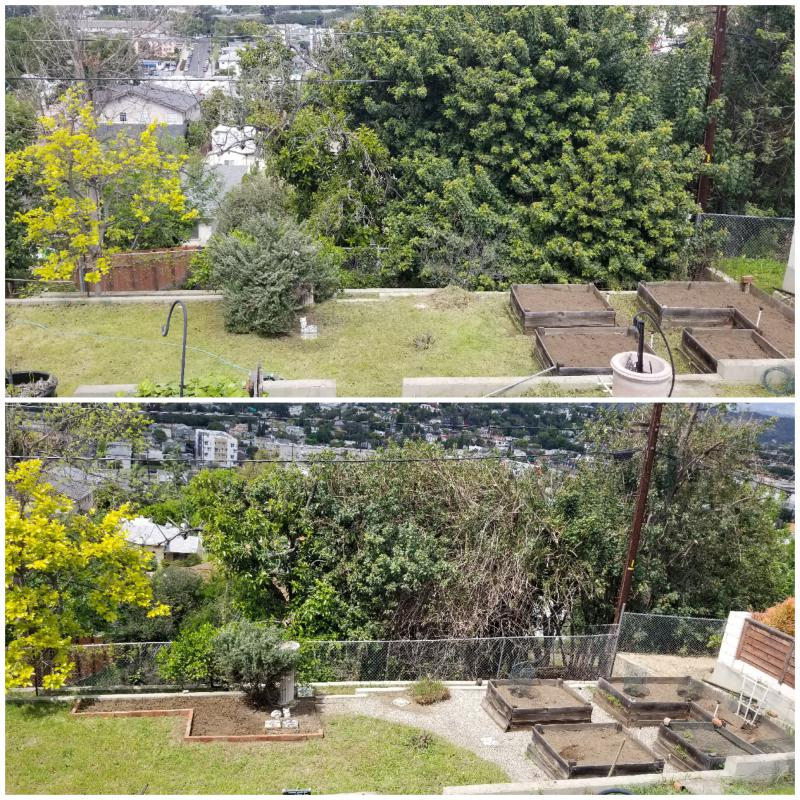 Garden before and after.