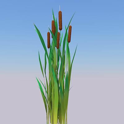 Bullrushes 3D Model  FormFonts 3D Models  Textures