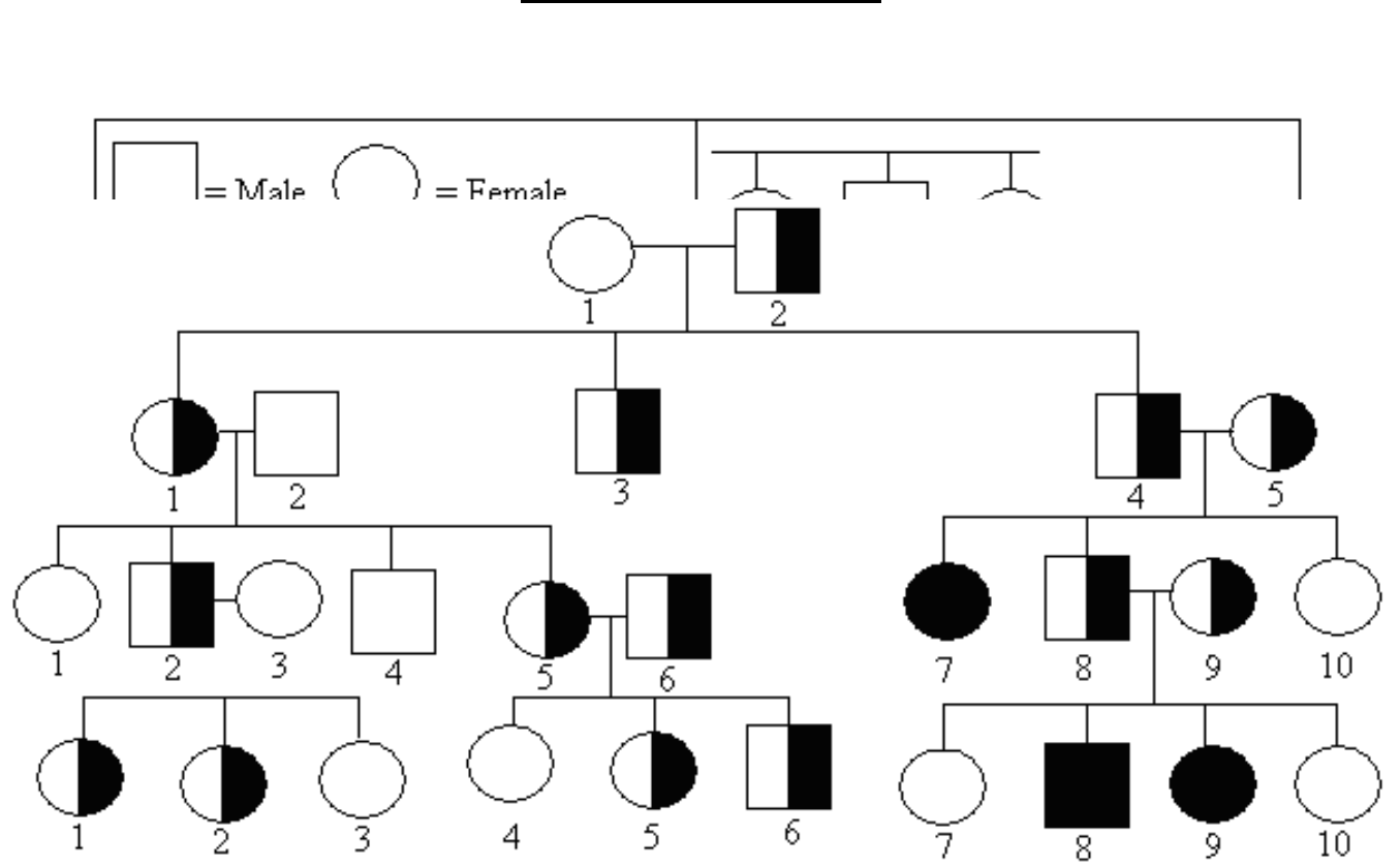 Simple Pedigree Chart Free Download