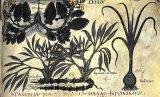 Plantele vindecatoare ale dacilor
