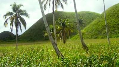 Volcanic soil plantation