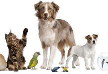 Mascotas - Formula Medica